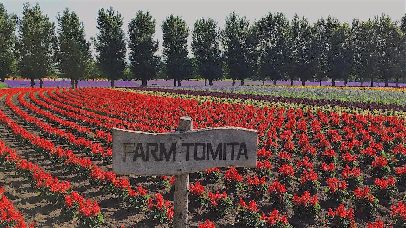 Tomita Farm Hokkaido