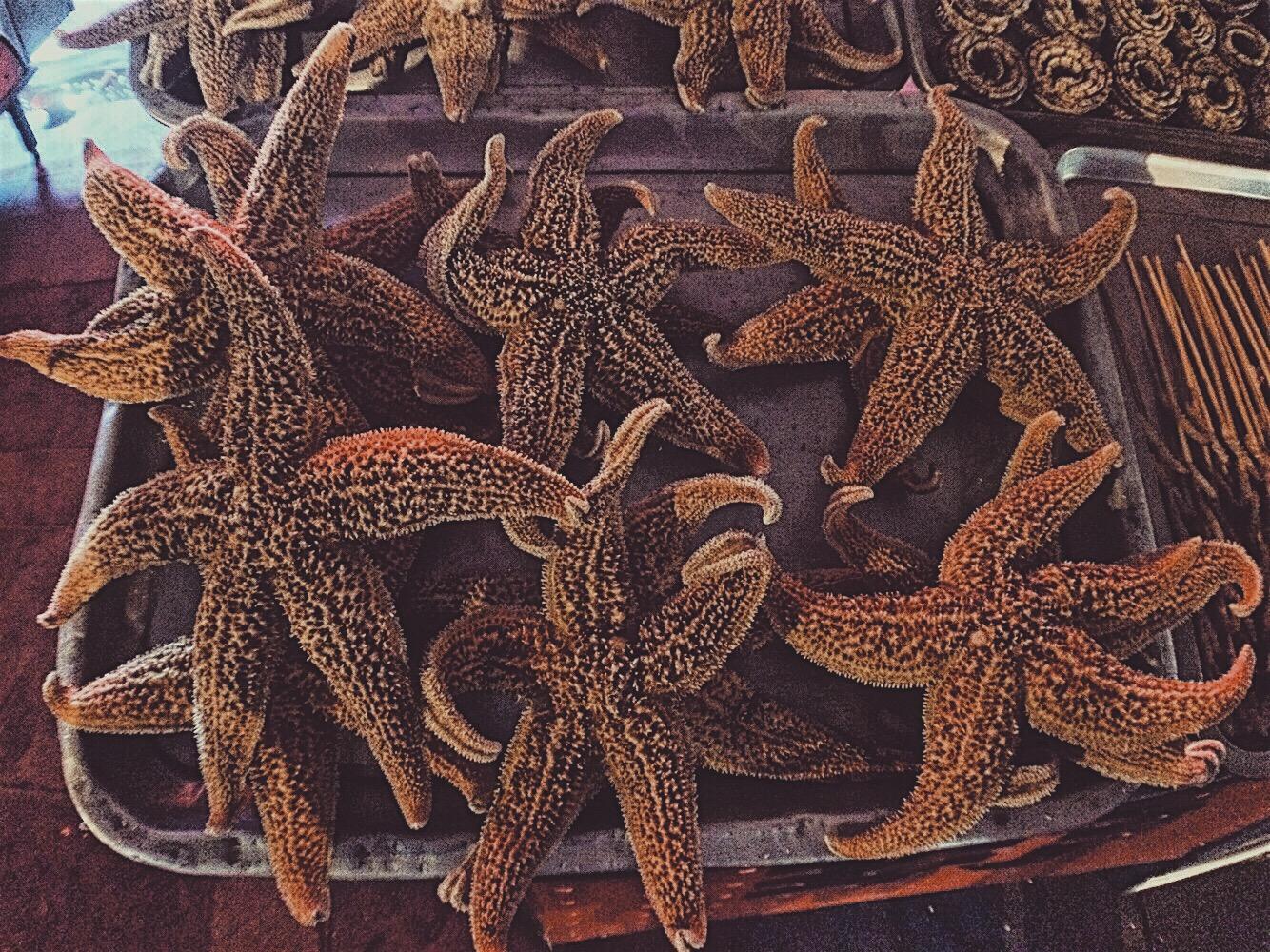 Starfish Wangfujing Snack Street