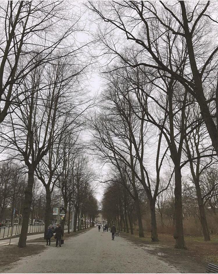 Trees Stockholm Sweden Scandinavia
