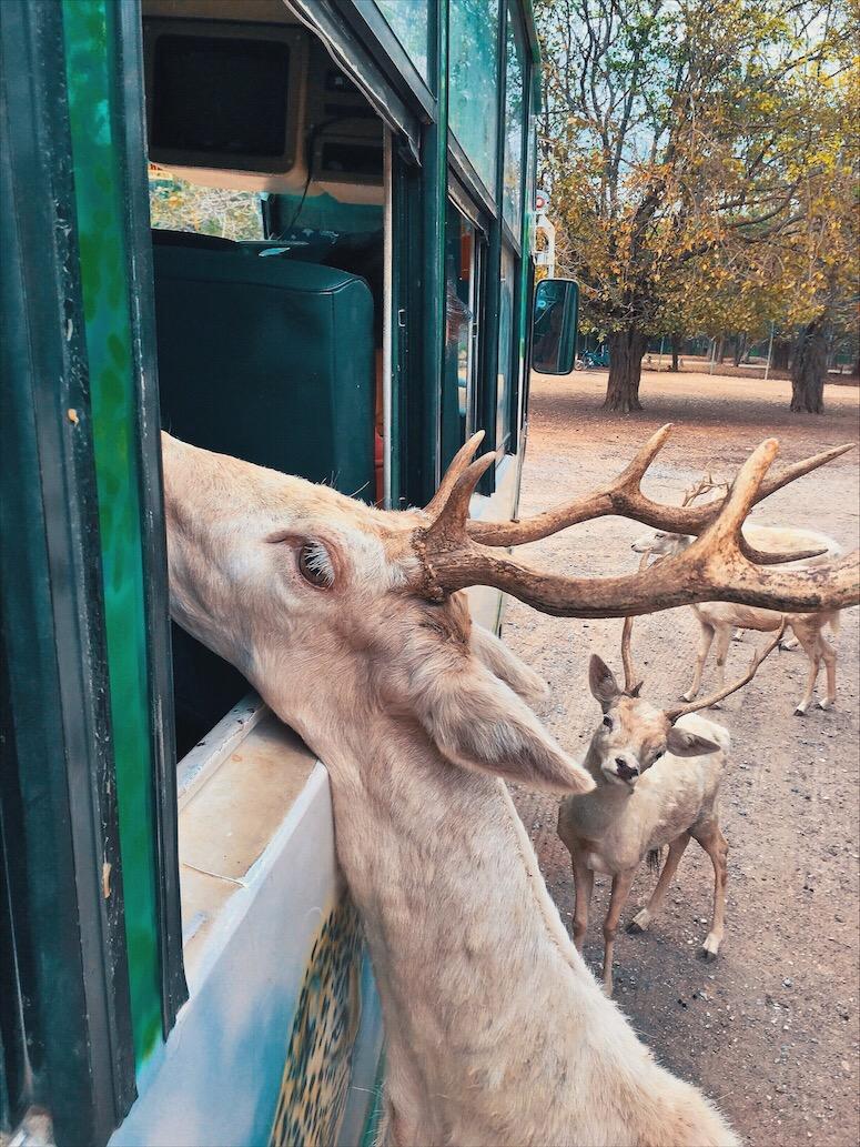 kanchanaburi Safari Zoo Bangkok Thailand