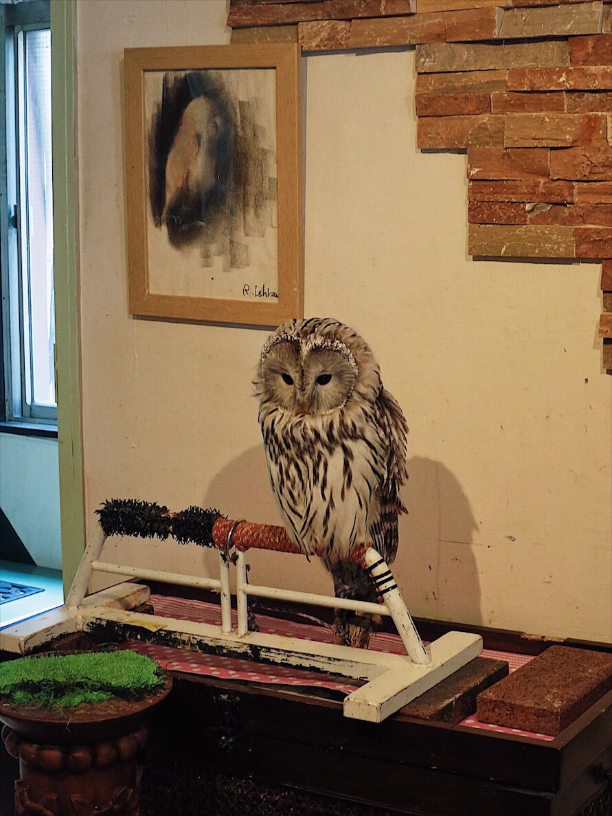 Owl Cafe Dōtonbori Osaka Travel Guide