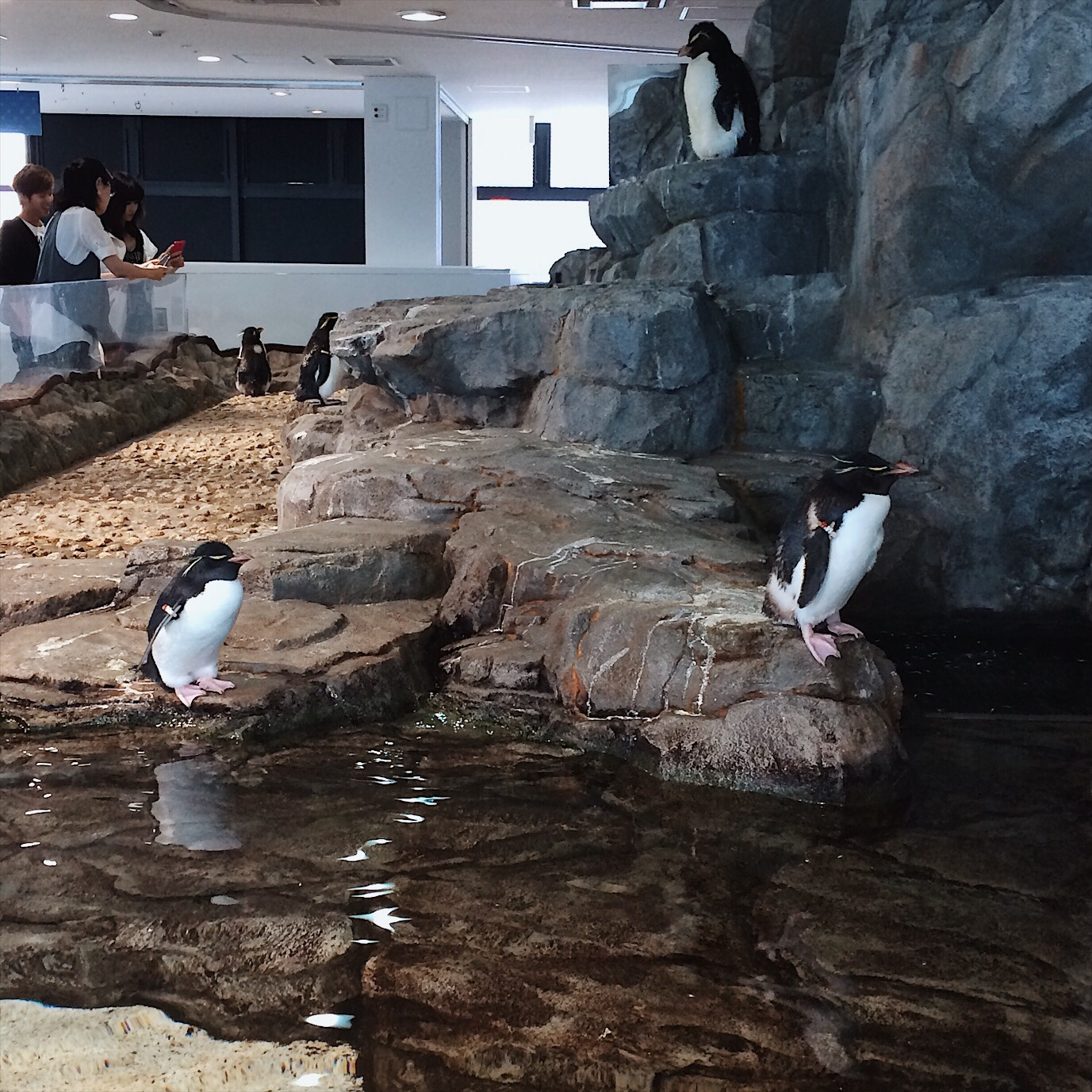 Osaka Aquarium Osaka Travel Guide