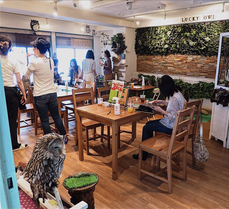 Owl Cafe Dotonburi Osaka Travel Guide