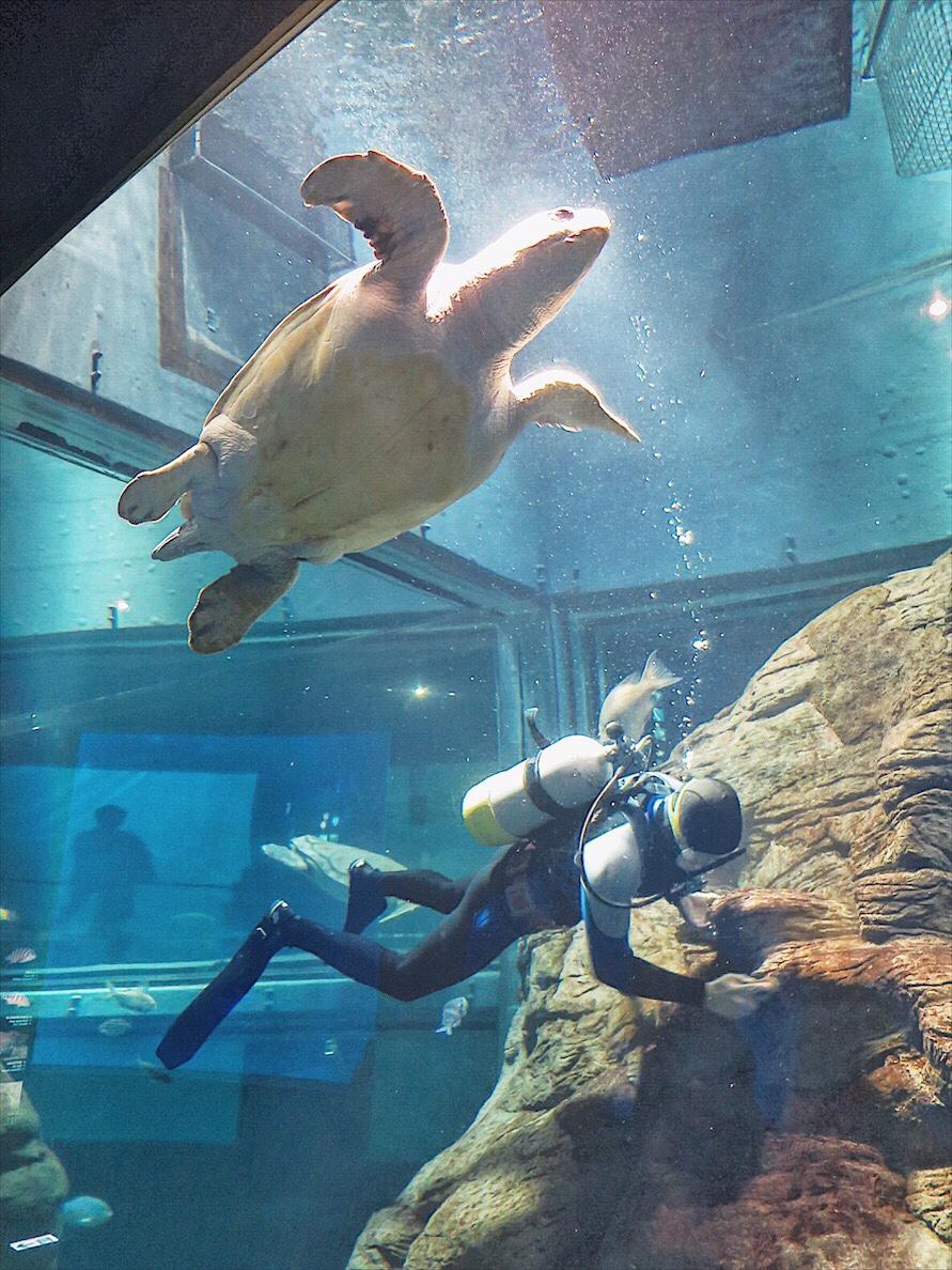 Osaka Aquarium Osaka Travel Guide