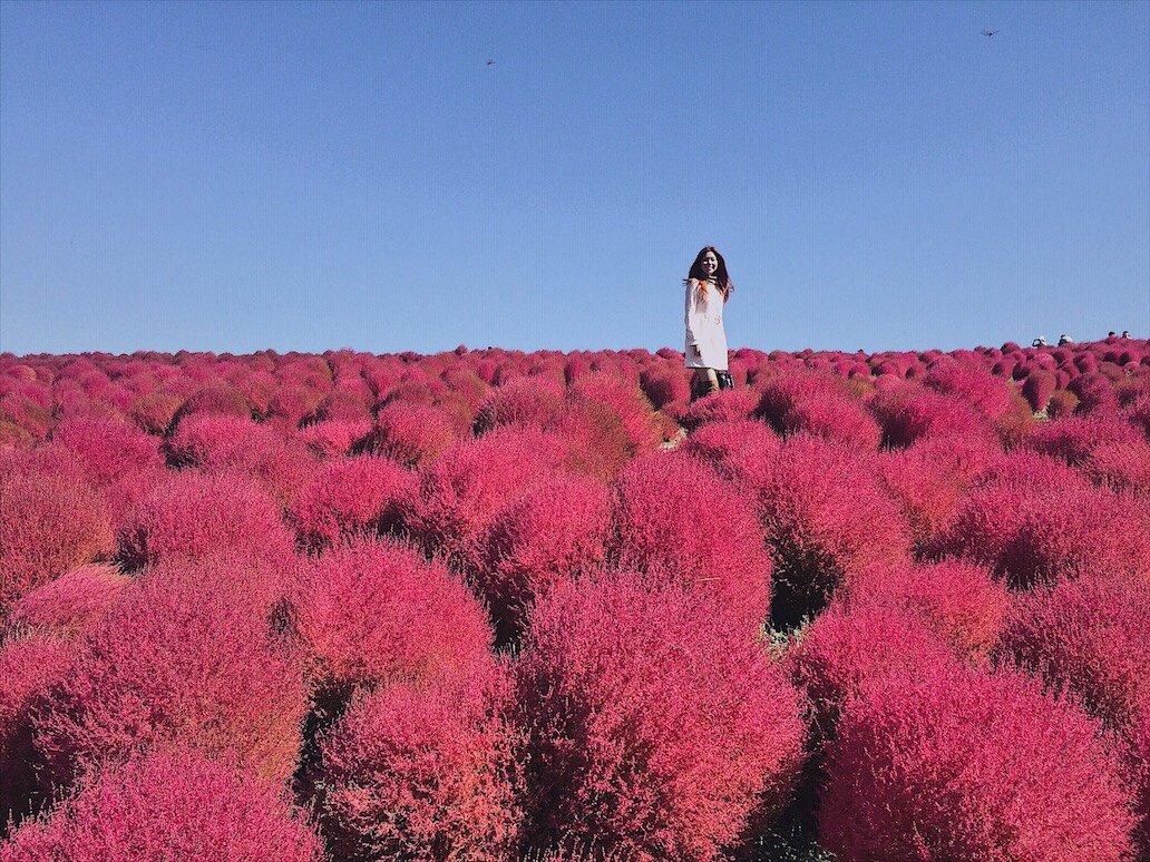 Bianca Valerio hitachi seaside park ibaraki Japan