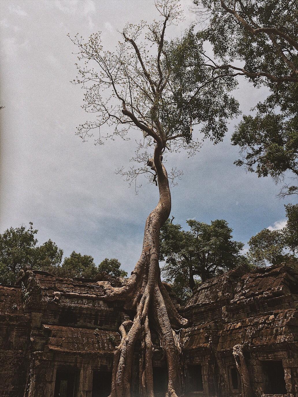 Cambodia Angkor Wat Ta Phrom Siem Reap