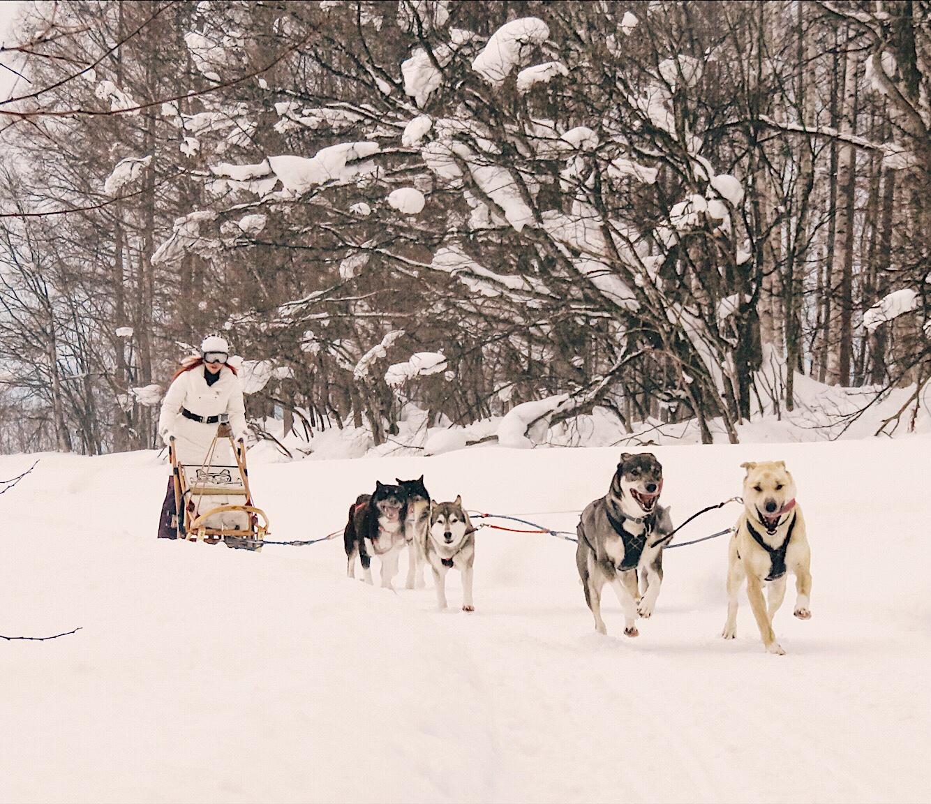 Bianca valerio husky sledding Hokkaido Japan